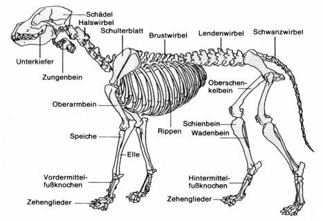 vom Haus an der Schiene - Anatomie